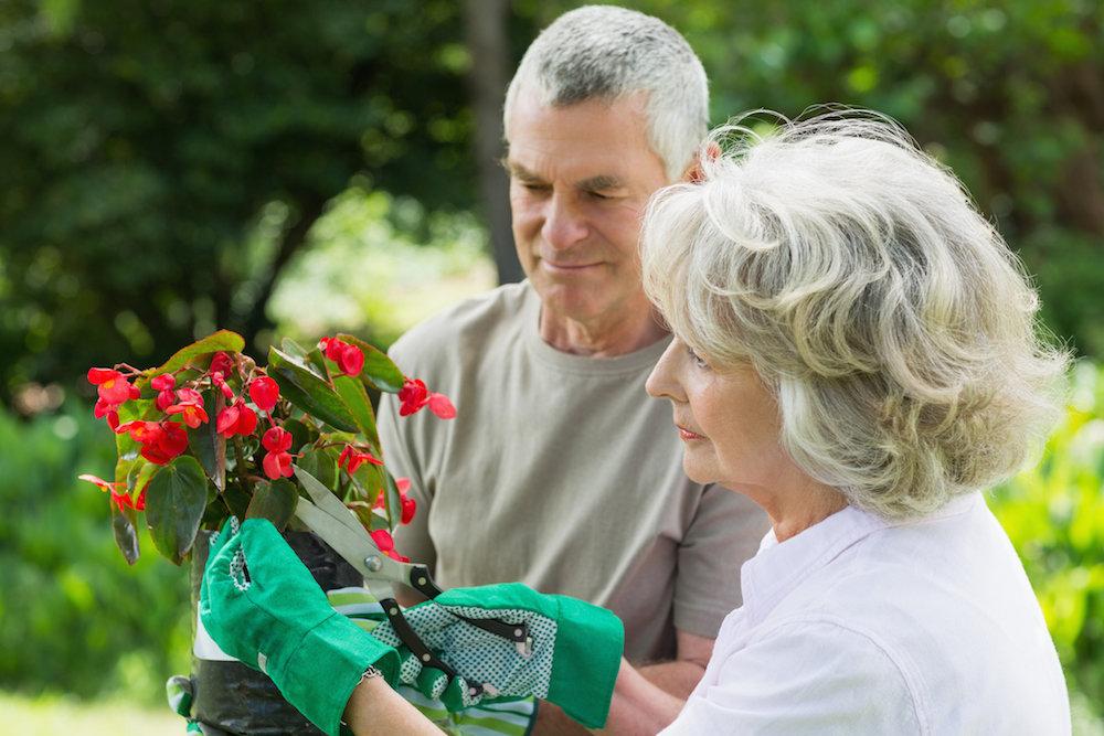 Benefits of Gardening for the Elderly
